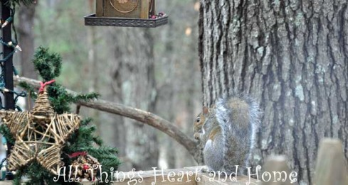 squirrel-eating-birdseed