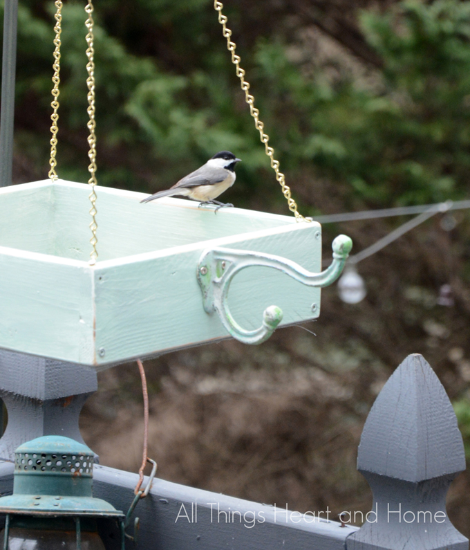 Easy-Box-Bird-Feeder